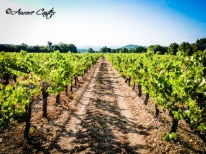vignes-horizon-fb-300x225