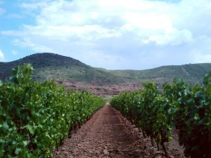 les ruffes rouges du Vignoble des 2 Terres