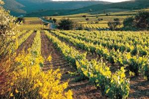Vue sur le vignoble des 2 Terres
