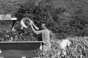 vignerons-2-300x200
